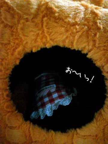 NEC_0001_20121017194903.jpg