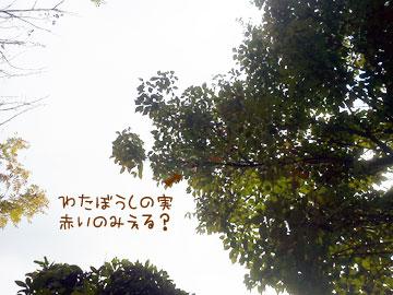 NEC_0001_20121021141820.jpg