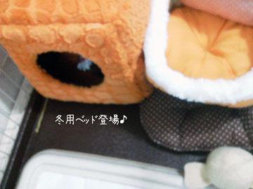 NEC_0002_20121017194902.jpg
