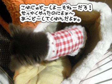 NEC_0002_20121108190157.jpg