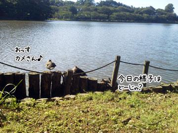 NEC_0003_20121008101411.jpg