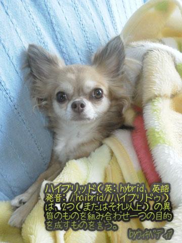 NEC_0005_20120930114705.jpg