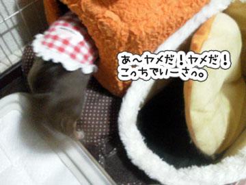 NEC_0005_20121108190156.jpg