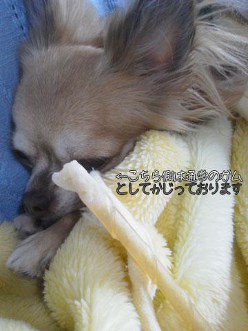 NEC_0006_20120930114704.jpg