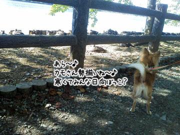 NEC_0006_20121008101410.jpg