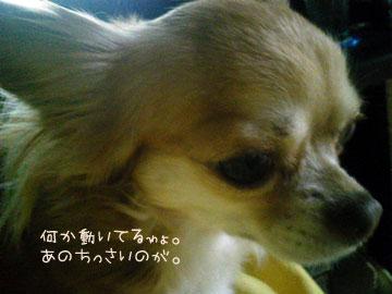 NEC_0008_20121108190156.jpg