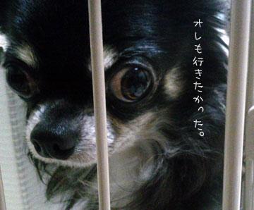NEC_0011_20121107203746.jpg