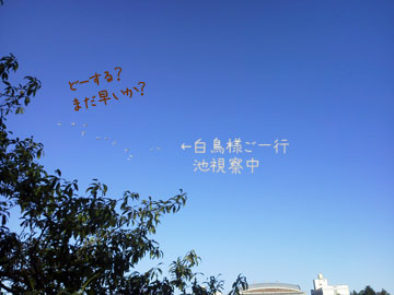 NEC_0012_20121008101425.jpg