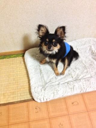 fc2blog_20120925234448645.jpg