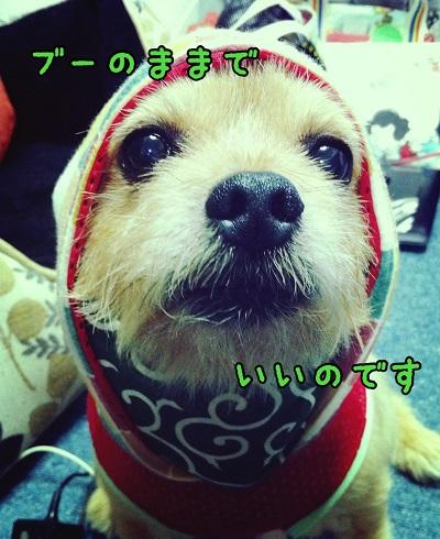 IMG_2746.jpg