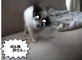 豕」縺柔convert_20120630214806