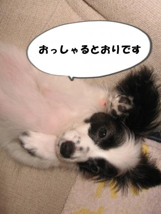 縺翫▲縺励c繧祇convert_20120707231910