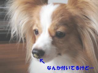 縺ェ繧薙°_convert_20120709152716