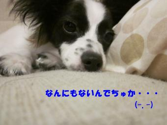 IMG_1339_convert_20120814164138.jpg