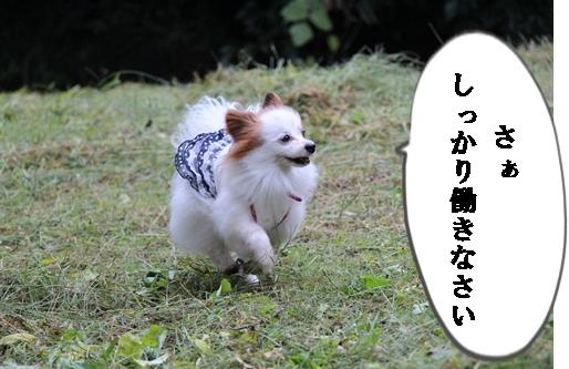 IMG_1600.jpg