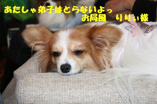 IMG_2811.jpg