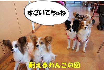 IMG_3300.jpg
