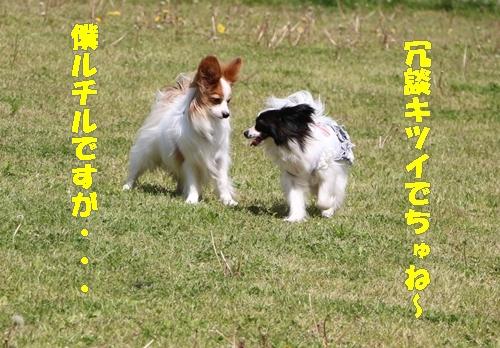 IMG_4988-crop.jpg