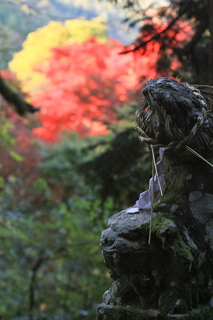 滝山公園 竜王滝 紅葉