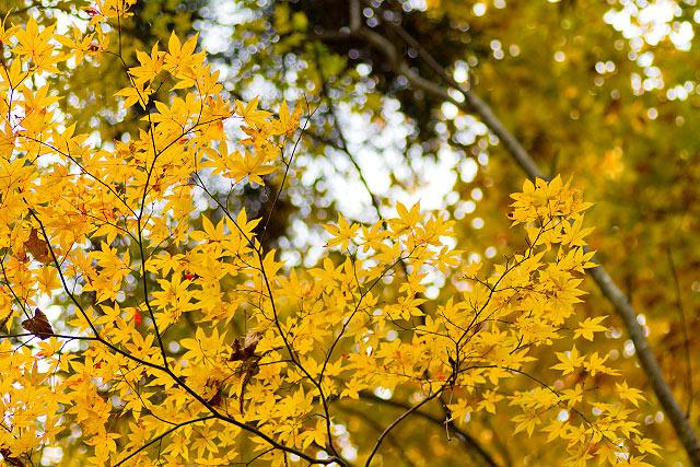 岡山県真庭市蒜山 山乗渓谷の秋