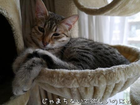 K8d_yapR.jpg