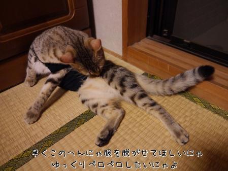 m2_X8ayK.jpg