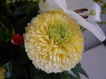 bouquet oct4