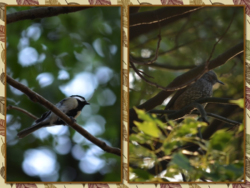 鳥さんたち