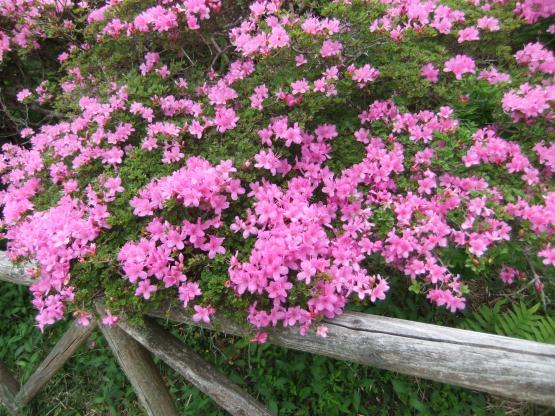 2012_0513AX_convert_20120516185859.jpg