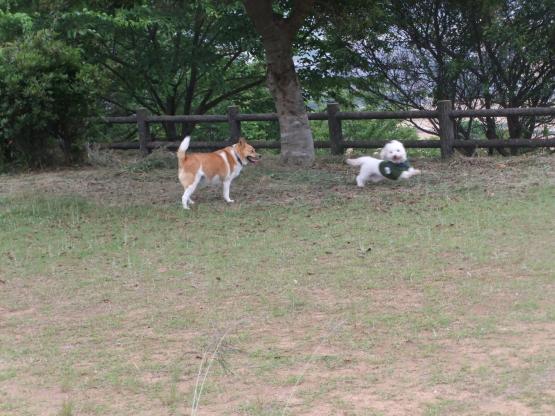 2012_0601DO_convert_20120609183052.jpg