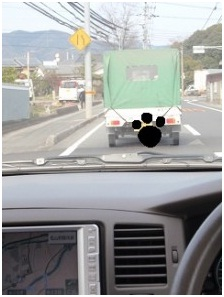 愛媛県東温市役所とは?残虐な捨て犬狩り、ブログのみんなの必死さでストップしています004