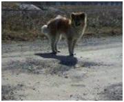 愛媛県東温市役所とは?残虐な捨て犬狩り、ブログのみんなの必死さでストップしています005