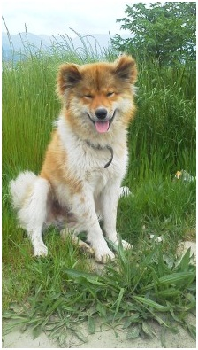 愛媛県松山から犬達のSOS夜の界隈でも陽子ママさんよろしくね&ペットを同伴災害対策マニュアル001