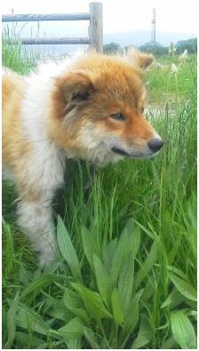 犬達のSOS『乱立するペットショップ、繁殖業者の認可をドイツや欧米諸国のように厳しく』001