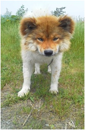 愛媛県動物愛護センターと本気で殺処分を減らし続けた熊本市の違い、愛媛新聞と熊本日日新聞との違い012
