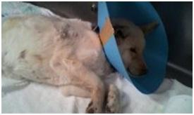 愛媛県動物愛護センターの毒ガス室殺処分前日に助けられた姫ちゃん日記⑩002