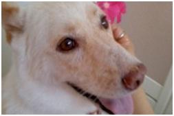 愛媛県動物愛護センターの毒ガス室殺処分前日に助けられた姫ちゃん日記⑩010