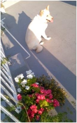愛媛県動物愛護センターの毒ガス室殺処分前日に助けられた姫ちゃん日記⑩015