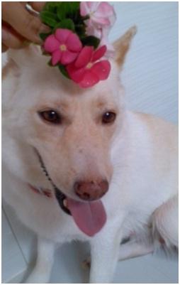 虐待捕獲の末、毒ガス室の殺処分前日に助けられた姫ちゃん日記⑪&プリンス銀次郎.犬達のSOS004