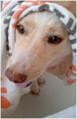 虐待捕獲の末、毒ガス室の殺処分前日に助けられた姫ちゃん日記⑪&プリンス銀次郎.犬達のSOS007