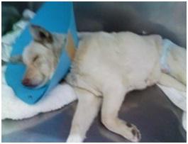虐待捕獲の末、毒ガス室の殺処分前日に助けられた姫ちゃん日記⑪&プリンス銀次郎.犬達のSOS041
