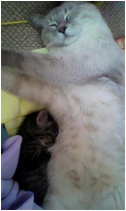愛媛県南予地方の産まれた犬猫の赤ちゃんを海や川に流す風習と愛媛県東温市河原のストーカー005