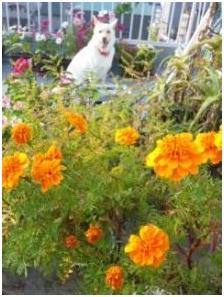 愛媛県知事 中村時広さんへ 人にも動物にも優しい愛ある県政を 犬達のSOSミーママより005