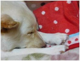 愛媛県保健所の職員達に虐待捕獲の末、毒ガス室前日に助けられた姫ちゃん⑱ロンちゃん家にホームステイ009
