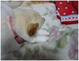 愛媛県保健所の職員達に虐待捕獲の末、毒ガス室前日に助けられた姫ちゃん⑱ロンちゃん家にホームステイ026