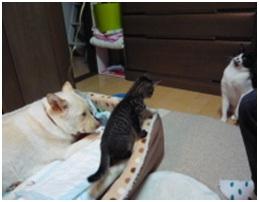 愛媛県保健所の職員達に虐待捕獲の末、毒ガス室前日に助けられた姫ちゃん⑱ロンちゃん家にホームステイ027