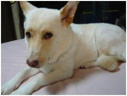 愛媛県保健所の職員達に虐待捕獲の末、毒ガス室前日に助けられた姫ちゃん⑱ロンちゃん家にホームステイ032