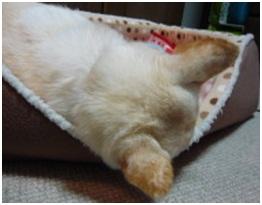 愛媛県保健所の職員達に虐待捕獲の末、毒ガス室前日に助けられた姫ちゃん⑱ロンちゃん家にホームステイ041