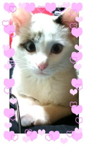 愛媛県松山市保健所野犬捕獲課とは得居獣医の醜い保身と脅し、ミーママとの電話&犬達のsos愛猫写真001