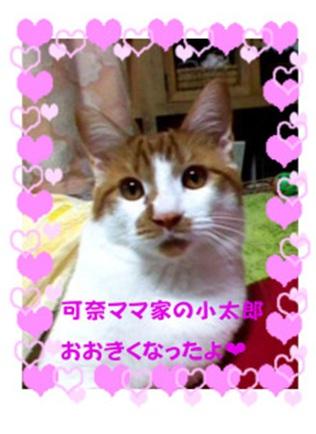 愛媛県松山市保健所野犬捕獲課とは得居獣医の醜い保身と脅し、ミーママとの電話&犬達のsos愛猫写真002